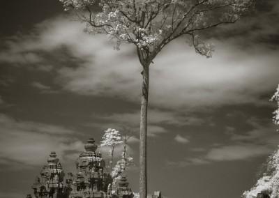 Angkor Thom Tree, Cambodia