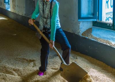 Raking Barley at LaPhroaig, Islay