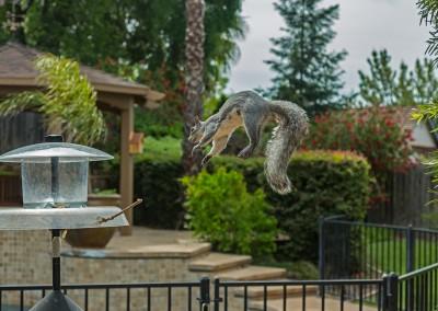 Squirrel Mid-Air Route 2 Again