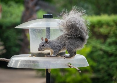 Squirrel Reward