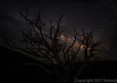 Bristlecone Pines-Juniper at Night
