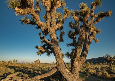Lee's Flat-Joshua Tree