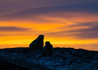 Bear and Cub at Sunset