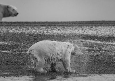 Cub Shaking Off Water