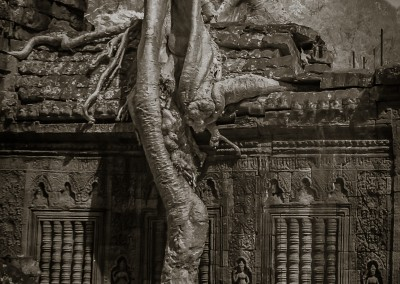 Ta Prohm Tree Root, Cambodia