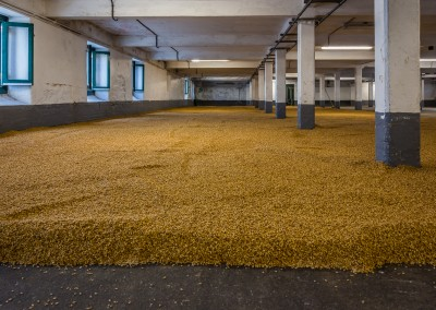 Drying Barley at LaPhroaig, Islay