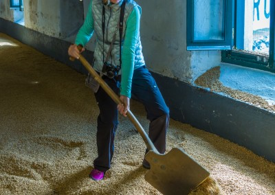 Raking Barley at LaPhroaig, Islay
