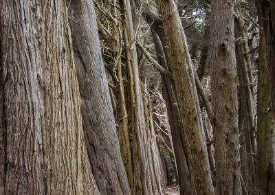 Cypress In Line Helm Grove