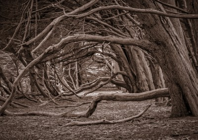 Peering Through Helm Grove