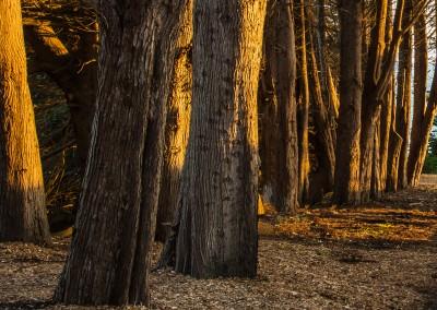 Cypress Grove Sunset