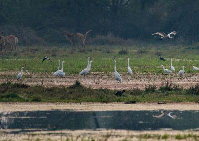 Diverse Fauna at Keoladeo