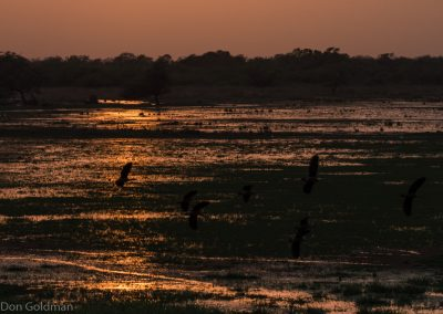 Keoladeo Sunset