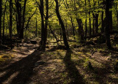 Beech Tree Grove