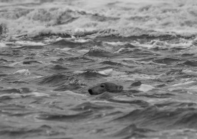 Rough Beaufort Sea 3