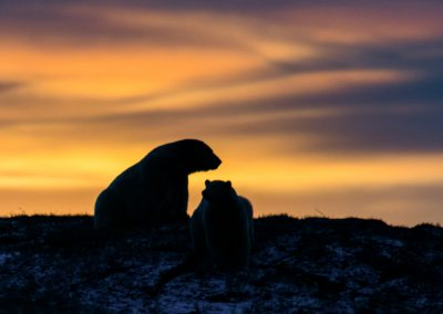 Mom Protecting Cub at Sunset