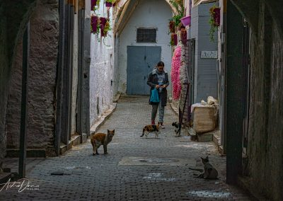 Alley Cats Fez