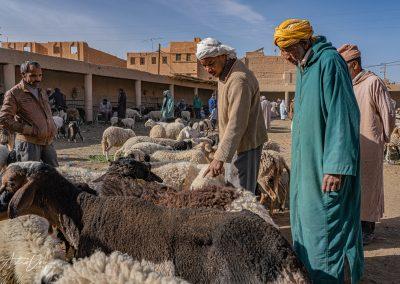 Animal Market Risanni