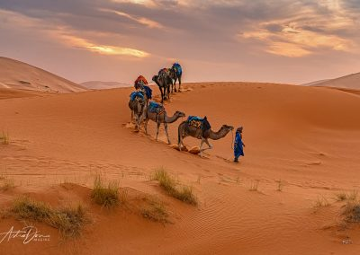Camels in the Desert 2