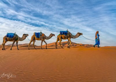 Camels in the Desert 4