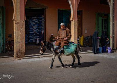 Donkey Rider Risanni