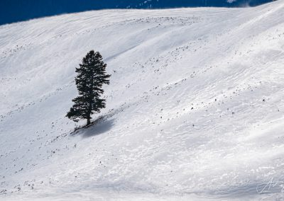 Lone Tree on Slope