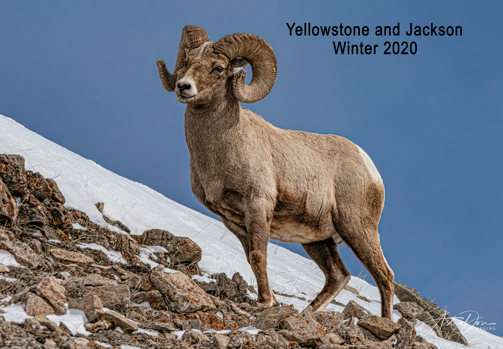 Yellowstone and Jackson Winter 2020